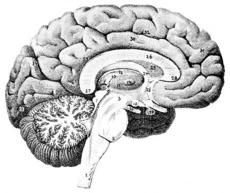 which part of the brain controls balance