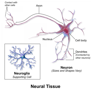 nervous tissue function