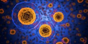 body cells function