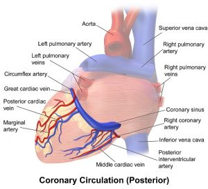 coronary sinus function