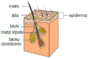 Hair follicle infection